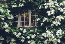 tuin planten