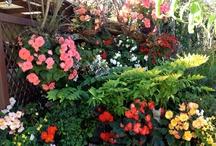 The Garden & Outdoors