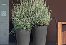 Outdoor & Pottery & Plants