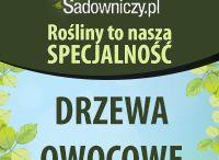 Drzewa Owocowe Sklep Sadowniczy.pl / Zdjęcia naszych Drzew owocowych - Sadowniczy.pl