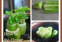 how does your garden grow / by Brooke Cunningham