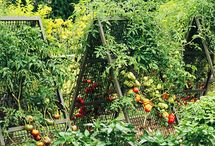 growing a green garden / all things for organic gardening; compost, vegies, chickens and more