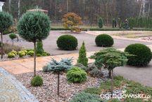 ogród- ciekawe rośliny