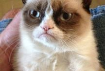 grumpy cat / by Stephanie Deskins