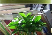 Jardiplante