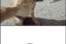 Cani in pose curiose