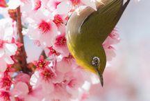 blossom spring blossom