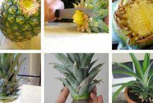 Gemüse aus abfall