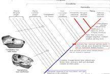 EVOLUÇÃO DA VIDA - BIOLOGIA