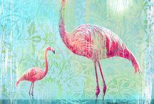 sweet flamingos
