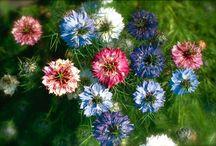 Nigella Wedding Flowers