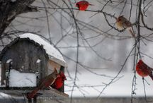 Lovely Winter / Winter Time Photos