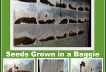 Things 4 GARDENING - SEEDS, SEEDS, SEEDS / by Erica Haack