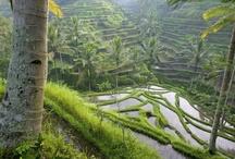 Bali / Vakantie 2013