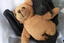 bat / sweet flying fox bat