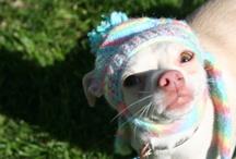 Pets in Hats