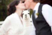 Wedding Photo Bomb / by Kaptur