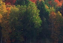 Michigan Secrets / Special places in Michigan.... / by Mary Cardone