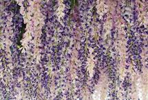Wedding Inspiration | Kiera + Alex / Lavender and Blush Floral inspiration for custom wedding stationery designs.
