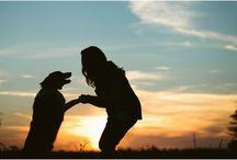 photoshoot dog