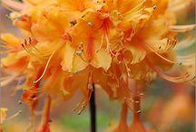 Beautiful Flowers II