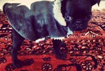 Bijou! / My Pug
