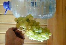Виноград. Уход