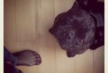 dog's life / by Anja Ka