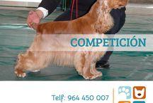 Competiciones / Nuestras Mascotas en Competición  En Corralet no solo amamos a los animales, también nos gusta demostrar que criamos a los mejores perros que pueden existir alrededor del mundo.