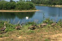 Wildlife at Tyram Lakes