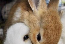 Bunny Love / by d*_*b