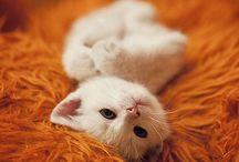 Cats / Miaow! :)
