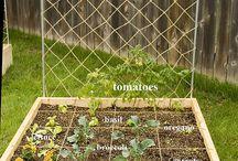 Herbs Garden / Herbs
