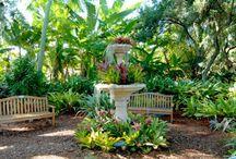 Spring in Sarasota / by Elizabeth Doane