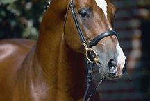 horse sports