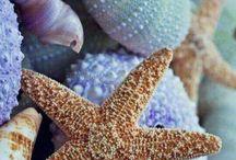 coquillages etoiles de mer