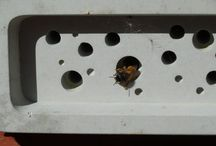 Green&Blue Bee Bricks in use / Please share your images of solitary bees nesting in the bee brick here, and we will too!