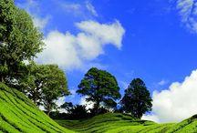 Mesmerizing Malaysia / Beautiful places in Malaysia