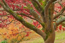 Tree Glory / Oh the beauty that trees create!