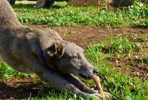O bolinhas da Horta da Lapa / Uma vida de cão