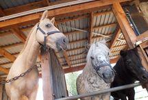 Tierisches / Wunderbare, lustige und niedliche Bilder unserer Bauernhof-Tiere.