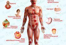 уголок здоровья