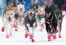 Winter & Dogsledding