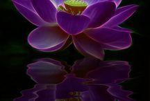 rostliny / květiny, kaktusy a jiné rostliny