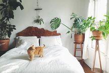 Pflanzen Tips
