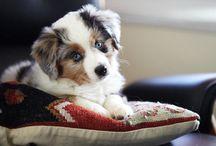 Puppy inspo