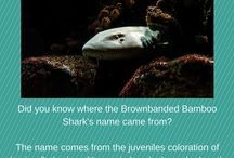 Did You Know? / Learn some fun facts about all of the creatures at the Greater Cleveland Aquarium