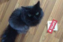 Mon chat / Ce tableau est tout simplement félin