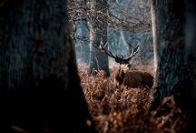 Nature, animals, wild