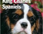 king charles cavaliers 2
